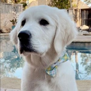 Doggy Bow Ties • 2 for $30